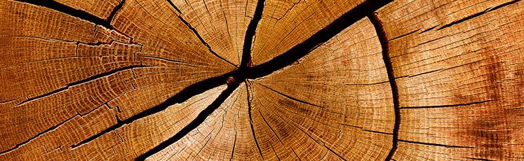 Holz-indul